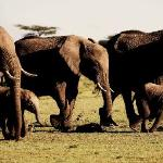 Red Elephants in Tsavo East National Park