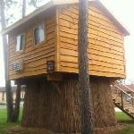 Our Tree House