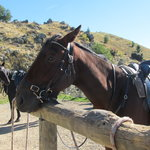 Mackenze Alpine Horse Trekking - Day Tours