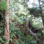 Ladders on the West Coast Trail
