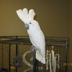 Black Hills Parrot Welfare & Education Center