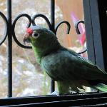  one of the parrots
