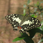 Lanta Butterfly Garden