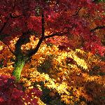 Autumn colour at Westonbirt