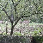 Deer by our campsite