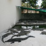 Siem Reap Crocodile Farm