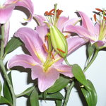 Close up of our own lillies