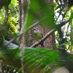Chambers Wildlife Rainforest Lodges Foto