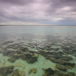 Stromatolites of Shark Bay