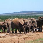 Herd of elephants at the waterhole