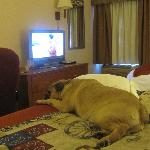 TV time for a tired pooch!  Brought my own favorite blanket for Bedtime TV viewing!e