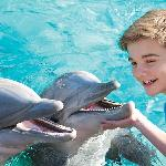 Dolphine Cove at SeaWorld San Antonio,