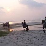 Photo of Outer Banks Riding Stables