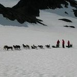 Chugach Express Dog Sled Tour