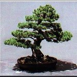 Museo del Bonsai