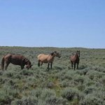 Green River Wild Horse Tours