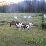 Swift Creek Outfitters & Teton Horseback Adventures - Day Tours