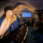  Nantucket Whaling Museum