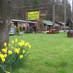 DAFFODIL TIME--PINE HILL MOTEL