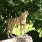 Provided by: Johannesburg Zoo