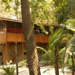 Foto The Jungle House