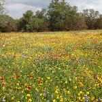 wild flowers on Willow City Loop 4/14/12