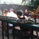  reptile show in beer garden