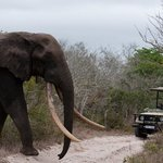 Tembe Elephant National Park