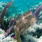  The coral all over the barrier reefs of Belize is colorful, with clear warm water.