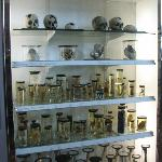 science collection of 18th century vintage