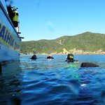 Paihia Dive