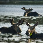 Moose & Wildlife Tours with New England Outdoor Center - Day Tours