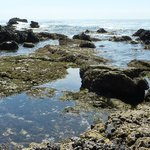 Glenn E. Vedder Ecological Reserve - Underwater Park and Tidepools
