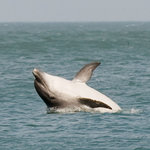 Dolphin Spotting Boat Trips