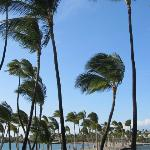  A Bay - blowing palm trees on lovely beach