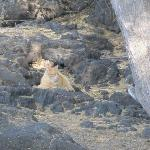 One of the wild cats of Waikoloa - feral cats taken care of by local non profit
