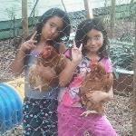 kids holding chickens