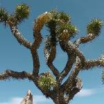  Joshua Tree Park
