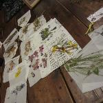  Made pressed flower pictures one evening
