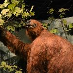 The nine-foot-tall Ground Sloth