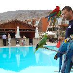  Parrot show at the Atlantic Sands