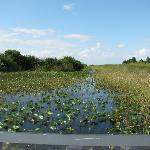 Cruising through the everglades on an airboat