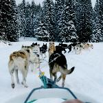 Don't miss dogsledding in Jackson