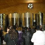 Wine processing & tour