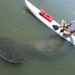 Manatee encounters