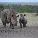 Photo de Porini Rhino Camp