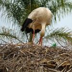  stork 2!!