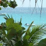 Sea Wind Resort Jamaicaの写真