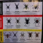 spider warnings