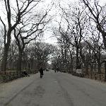 Central Park's Literary Walk